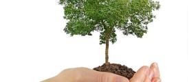 tamil-news-tree